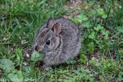 bunny_8