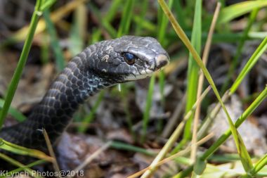 snake_23