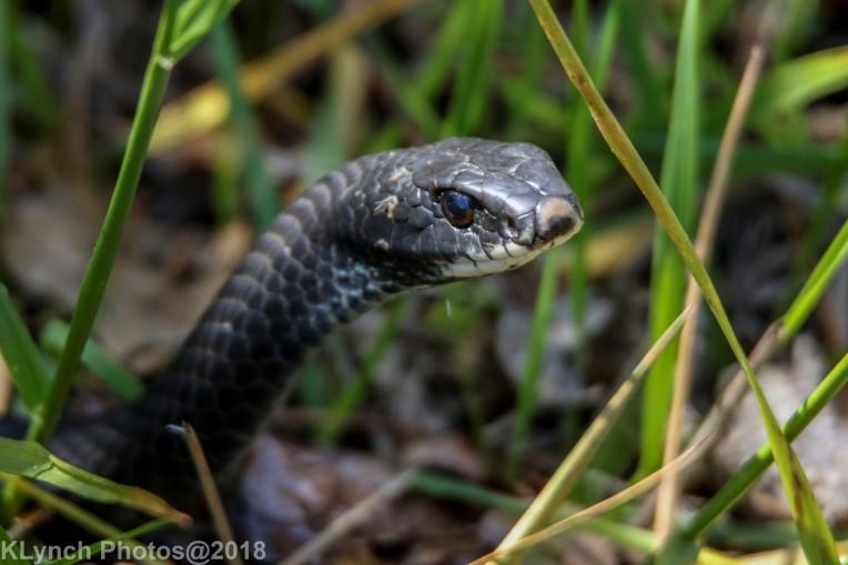 snake_25