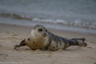 seal_142