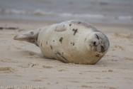 seal_152