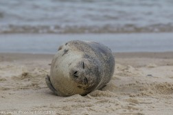 seal_20