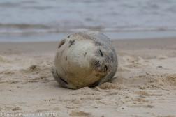 seal_24