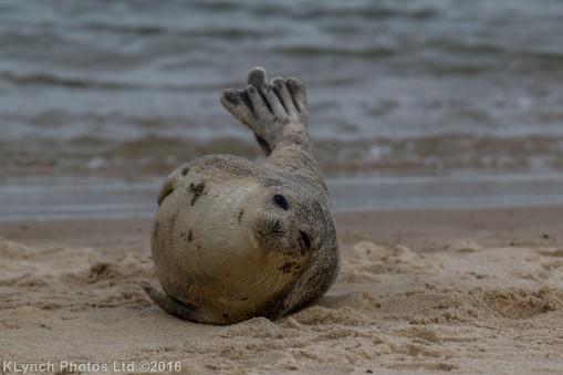 seal_33