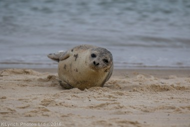seal_45