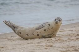 seal_70