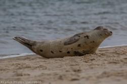 seal_87