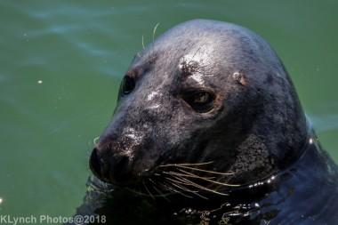 seals_62