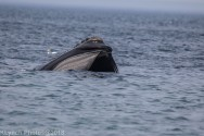 WhaleF_109