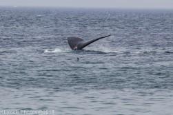 WhaleFg_131