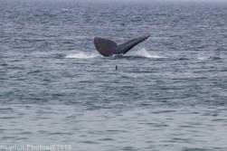 WhaleFg_133