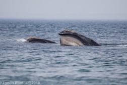 WhaleFg_45