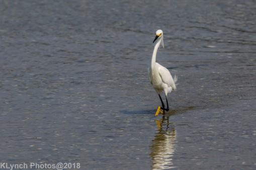 egret_4