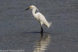 egret_6