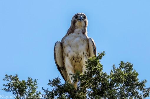 Hawk_46