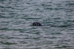 Seals_24
