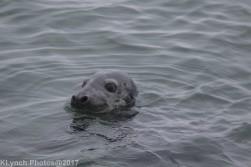seals_35