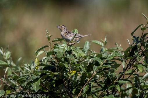 Sparrow_8