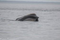 whaleA_161