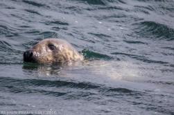 seal_19
