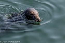 Seals_15