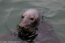 Seals_34