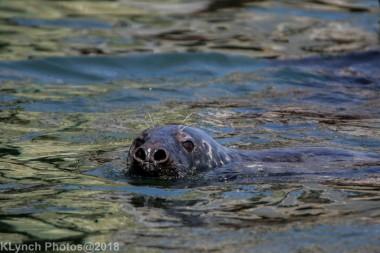 Seals_42