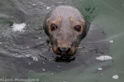 Seals_44