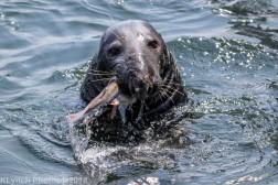 Seals_54