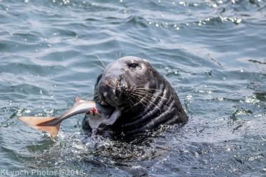 Seals_61