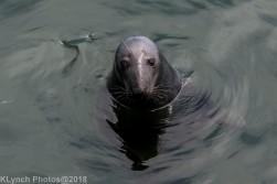 SealsB_26