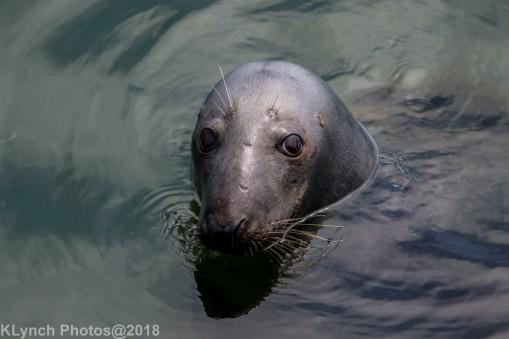 SealsB_29