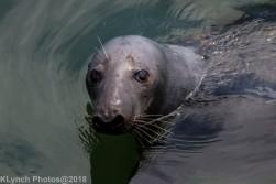 SealsB_35