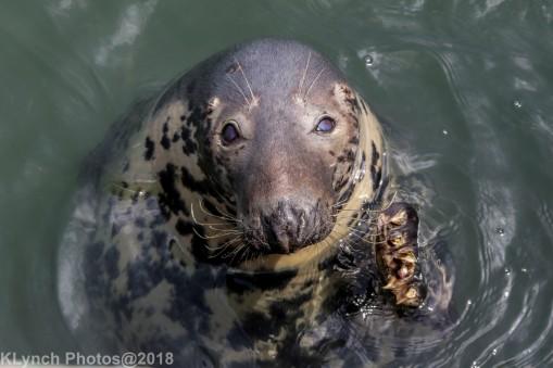SealsD_38