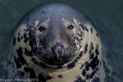 SealsD_53