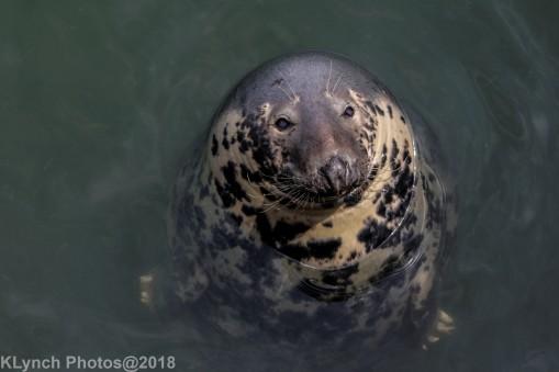 SealsD_63