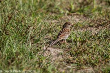 SparrowA_6