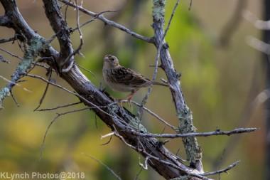 SparrowB_4