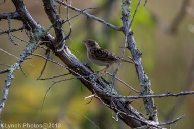 SparrowB_8