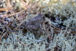 Toad_2