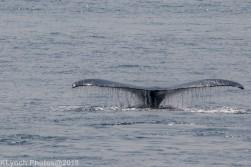 Whale_10