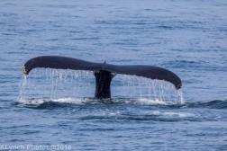Whale_105