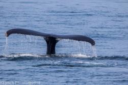 Whale_106