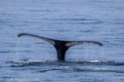 Whale_108
