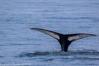Whale_110