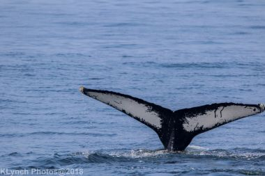 Whale_112