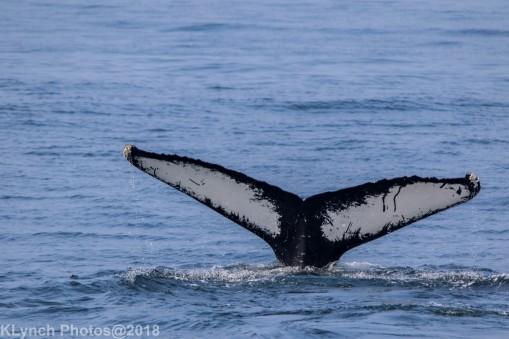 Whale_113
