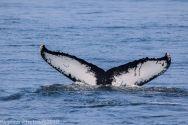 Whale_116