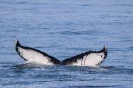 Whale_118