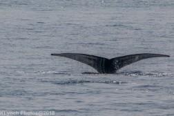 Whale_12
